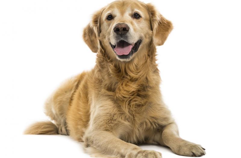 Test Allergia epitelio e pelo del cane | MyCare Microtrace
