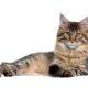 Test Allergia epitelio e pelo del gatto | MyCare by Microtrace